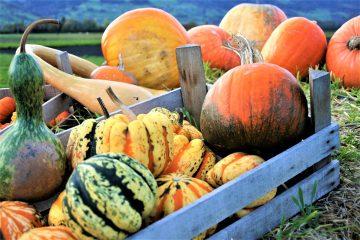 κολοκύθα halloween οφέλη υγεία διατροφή